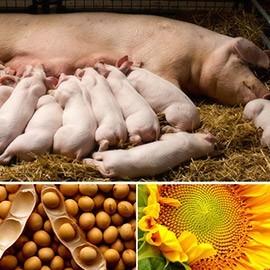 Специальные продукты для Свиней